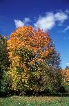 Осенняя опушка